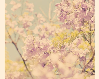 jacaranda tree photograph, photography, purple nursery art, Los Angeles blooms, blossoms powder blue spring delicate babys room print