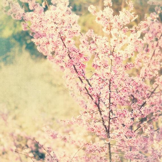 nature photography, cherry blossom tree photo, babys nursery art, pink mint green, photograph, spring, bloom pastel girls room print