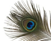 5 PEACOCK Feathers PRISTINE 5 inches beautiful natural tail feathers / Usa peacock wedding