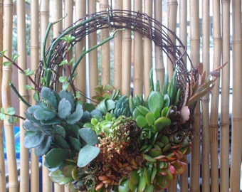 SPECIAL 18inch Willow Branches Living Wreath