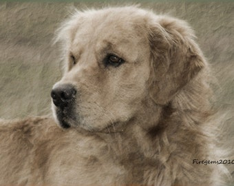 Blank note cards, greeting cards, dog, golden Retriever, photography, print, photo