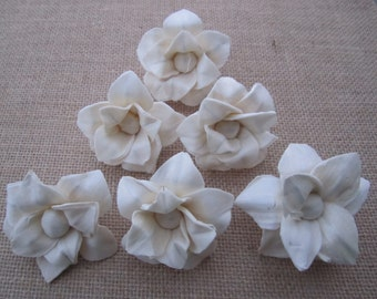 Sola star lily - set of 12