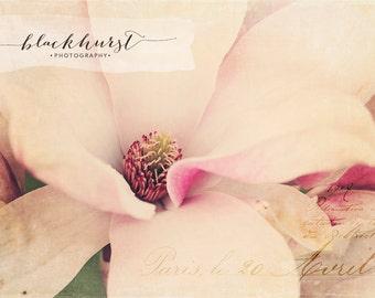 Magnolia III Fine Art Print