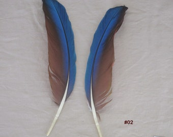 Green Wing Macaw Feathers - 5 Inch to 7 Inch Matched Sets of Bird Feathers