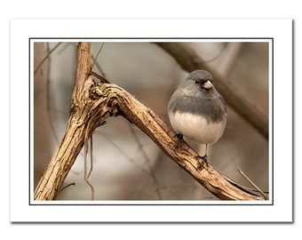 Bird Nature Note Card Includes Envelope, Perched Gray Junco photo card, Greeting Card, Brown, Thank You Card, blank notecards