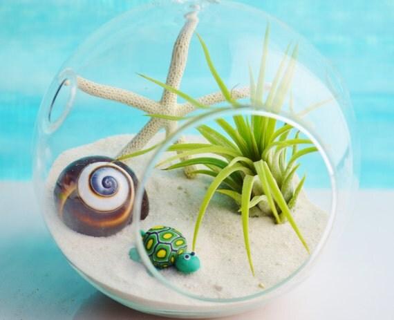 Turtle Terrarium Glass Globe Hanging Terrarium Kit With