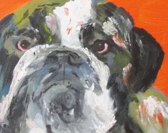 Orange Bulldog