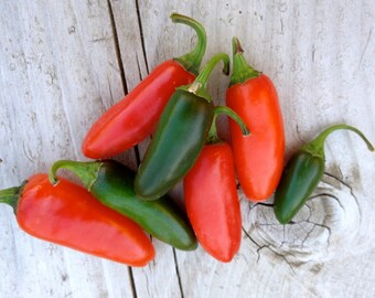 SALE ! Jalapeño Hot Pepper Early Heirloom Variety Organically Grown Rare Seeds