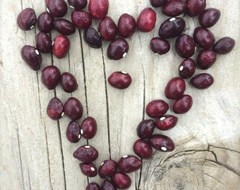 True Red Cranberry Dry Beans SALE Ancient Heirloom Excellent Flavor Very Creamy Smooth Texture Can't Be Beat Organically Grown Rare Seeds