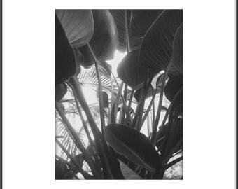 Black and White Palm, Large Wall Art, Modern Botanical Photography, Black and White Macro Plants, Cottage Chic Home Decor, Botanical Print