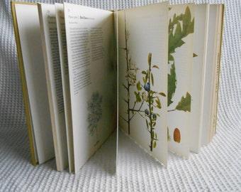 British Trees Book Vintage 1977 Colour