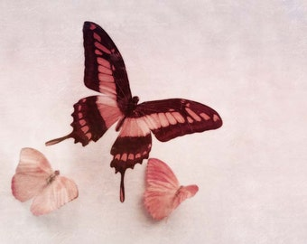 "Pastel Pink Butterflies - Fine Art Photo - 6 x 4"" READY TO SHIP"
