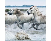 Horse Photography - HORSES  of the CAMARGUE - PAIRS - Edition Print