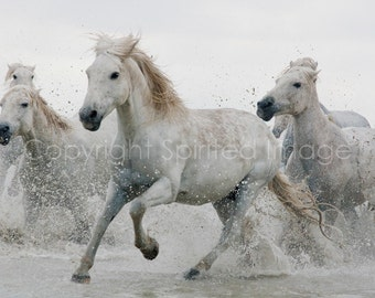 CAMARGUE HORSE, 7.5x5in Print - DANCER, equine photography, beach horses, nautical equine, wall decor, nursery art