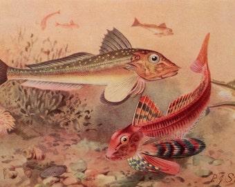 Vintage 1930s Sealife Bookplate Print Illustration Ocean Life FISH Aquatic Home Decor