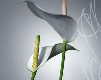 Flowers - 8x10 ( 20 x 27 cm) Fine Art Photograph