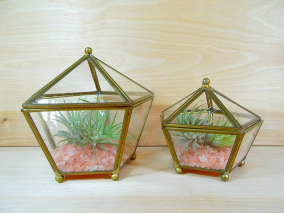 Glass Nesting Boxes : Vintage brass and glass jewelry box air plant succulent