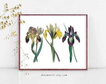 IRIS TRIO - Instand Digital Download - printable 1800's flower illustrations retooled by Anamnesis for prints, totes, pillows, fabric