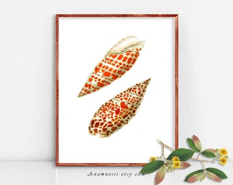 ORANGE SPOTTED SHELLS printable - Instant Download - antique sea shell illustration for framing use on totes, cards, clothes, etc. etc.