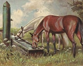 At the Old Trough - Antique 1900s Pastured Horses Unsigned Art Postcard