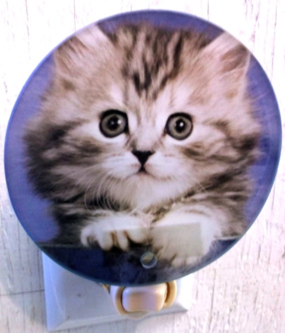 kitten in cup night light, animal night light, kitchen night light, bathroom night light, childs  night light, pretty night light