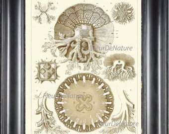 Jellyfish Print Ernst Haeckel 8X10 Art 29 Beautiful Anatomy of Jellyfishes Antique Ivory Sea Ocean Nature Home Room Decoration to Frame