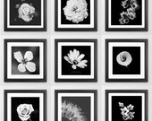 Floral Photography - Nature Photo Wall - Set of 9 Square Prints in Black & White Gift Wall Art Gallery Minimalist Monochromatic