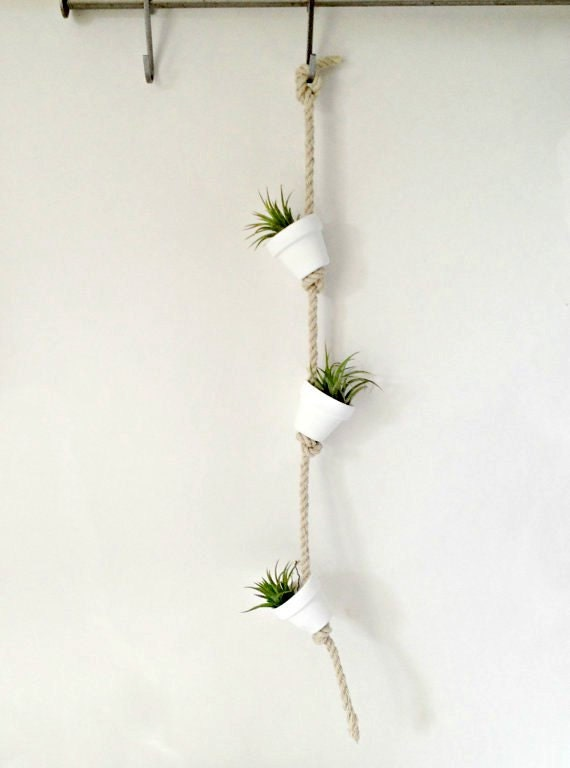 Pure white mini clay pot with air plants or succulents hanging for Air plant decoration