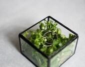 LIVRAISON - petit verre avec une boîte à charnière toit - porte - bijoux - mariage bague de boîte - anneau porteur - verre géométrique boîte gratuite