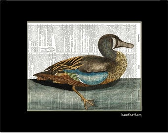 Blue Winged Teal Duck - Dictionary Art Print - Vintage Illustration - Book Page Art Print No.P415