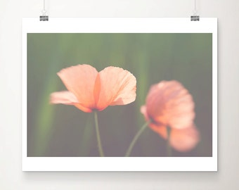 red poppy photograph red flower photograph nature photography red poppy print red flower print summer photograph nature print