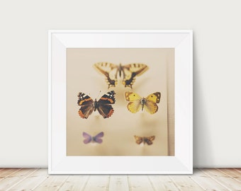 butterfly photograph, zoology print, butterfly, insect photograph, animal photography, color photograph, yellow, cream, wings