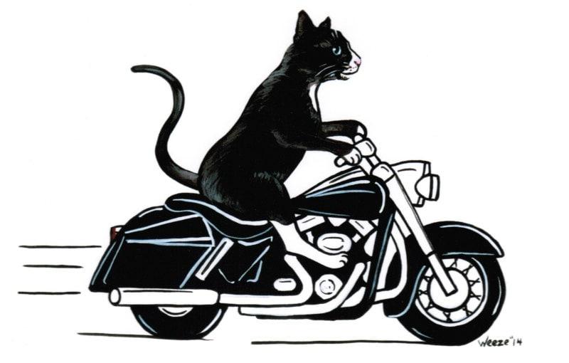 Cat Black Cat Black Cat Art Motorcycle Art Cats Cat