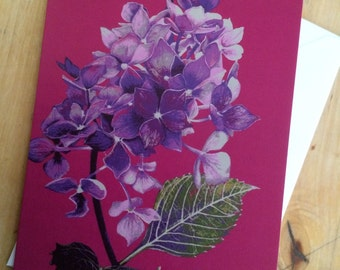 Hydrangea, art card