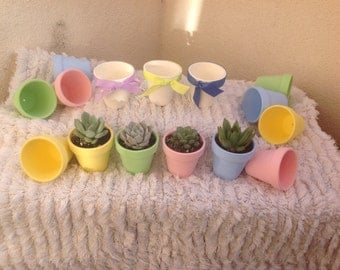 Succulent plants, listing for 25 baby shower, wedding shower favors.Beautiful succulents with hand painted containers.