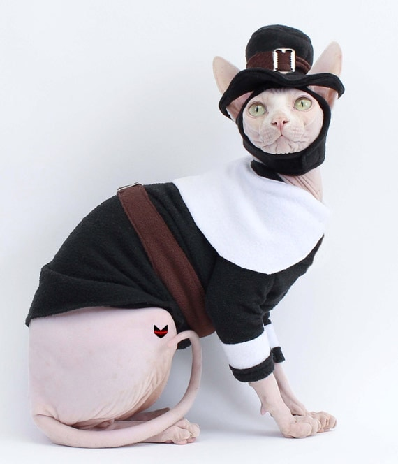 pilgrim cat costume