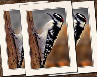 3 Downy Woodpecker Photo Note Cards - 5x7 Woodpecker Note Cards - Blank Bird Note Cards - Photo Greeting Card Handmade (BD9)