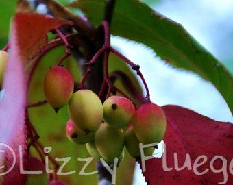 Autumn Berries photograph 6.75x10 Fine Art Photography Print of Nature along Tristan Bay