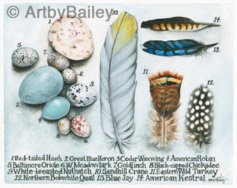 Eggs and feathers - archival print from original pen and ink and watercolor painting, botanical, illustration, identification, bird