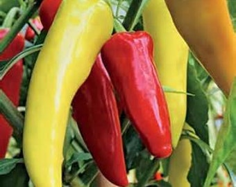 Organic Sweet Banana Pepper Seeds ~Mycorrhizae Inoculated/Bulk Available