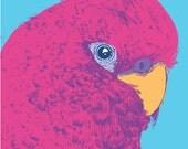 Illustration of Australian Bird - a Rosella