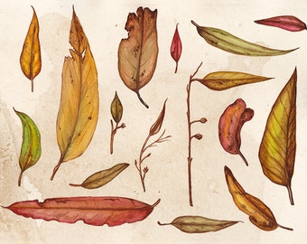 An Assortment of Gumleaves A4 Art Print