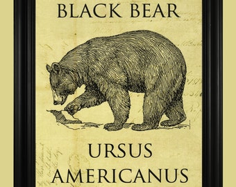 American Black Bear Art Print, North Woods Bear Illustration, Wildlife Poster,