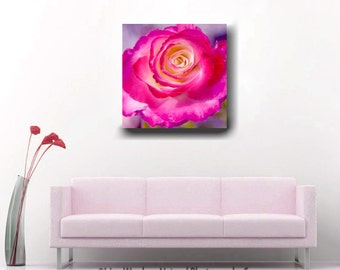 Magenta rose artwork flower photography, square canvas art, living room gallery wrap art 20x20, purple hot pink yellow decor floral wall art