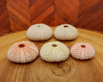 Sea Urchin - Light Pink Urchin- Purple Urchin Shell (RK14B5)