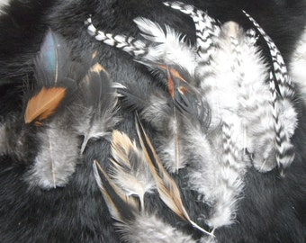 ethical feathers: variety of colors of feathers,25 assorted, natural, cruelty free, heritage breed chickens, craft feathers