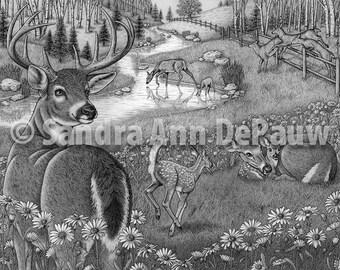 Animal Family - Deer