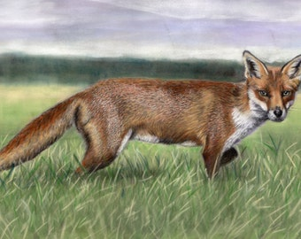 Countryside Fox - Limited Edition Mounted A3 print of a beautiful Fox