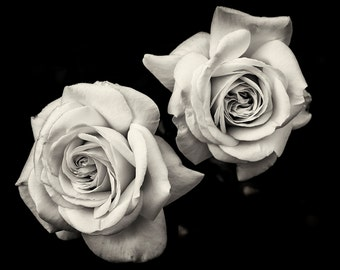 Flower Photography, Roses, Flowers, Garden, Nature, Fine Art Black and White Photography, Wall Art, Home Decor, Flower Print