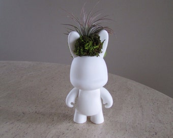 Tough Guy Bunny with Mounted Air Plant